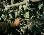 ΑΓΑΠΗ ΚΑΙ ΑΙΜΑ (1968)